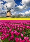 Po službo na Nizozemsko